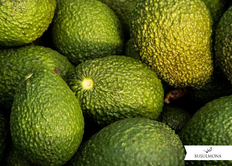 Avocado Busulmona: un alleato per la salute